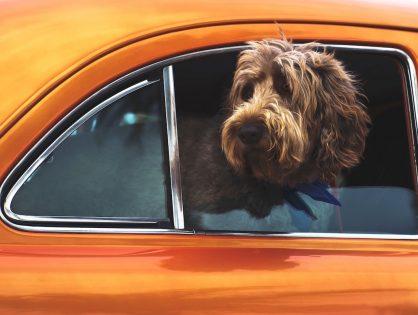 Haustiere und Datenschutz